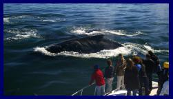 Full Day Tour Whale watching in Hermanus
