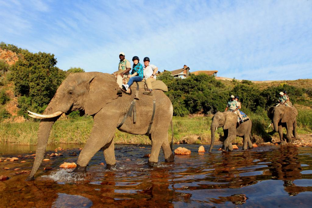 African elephant tour rides